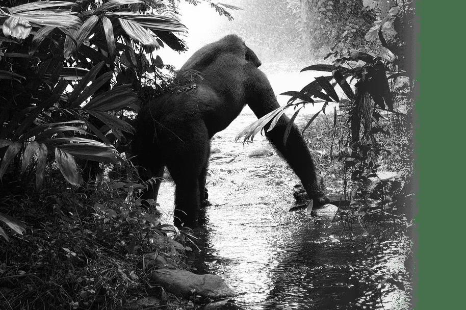Gorilla SEO Section 2 - BG 2